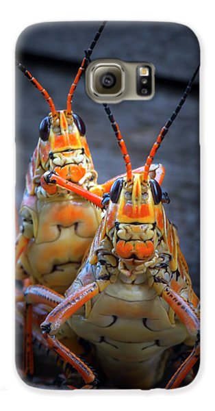 Grasshoppers In Love Galaxy S6 Case by Mark Andrew Thomas