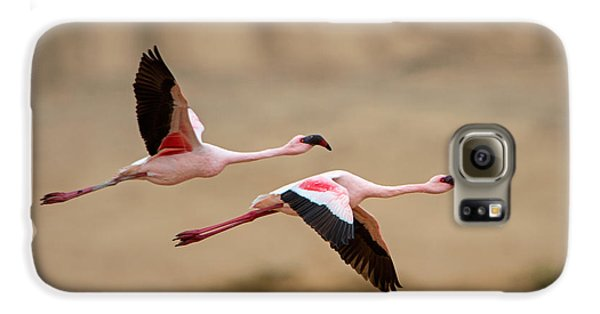 Greater Flamingos Phoenicopterus Roseus Galaxy S6 Case by Panoramic Images