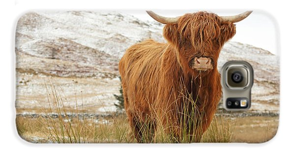 Cow Galaxy S6 Case - Highland Cow by Grant Glendinning