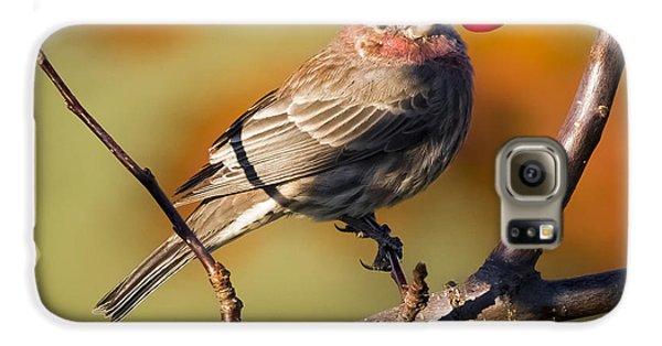 House Finch Galaxy S6 Case