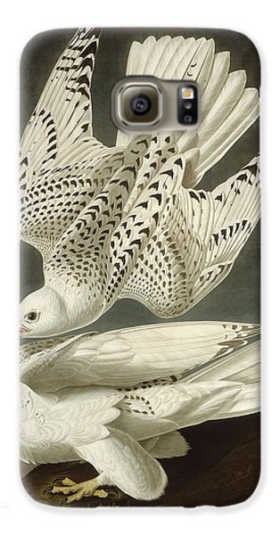 Iceland Or Jer Falcon Galaxy S6 Case by Dreyer Wildlife Print Collections