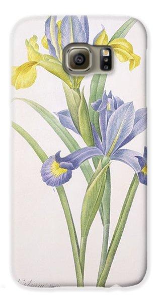 Iris Xiphium Galaxy S6 Case by Pierre Joseph Redoute