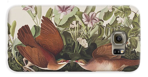Key West Dove Galaxy S6 Case by John James Audubon
