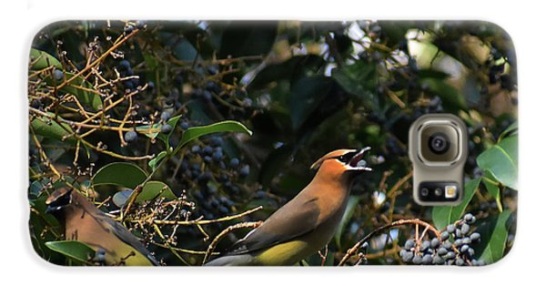 Cedar Waxing Galaxy S6 Case - Love Those Berries by Skip Willits