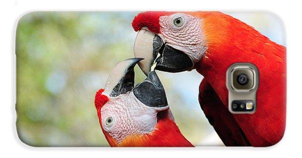 Macaws Galaxy S6 Case