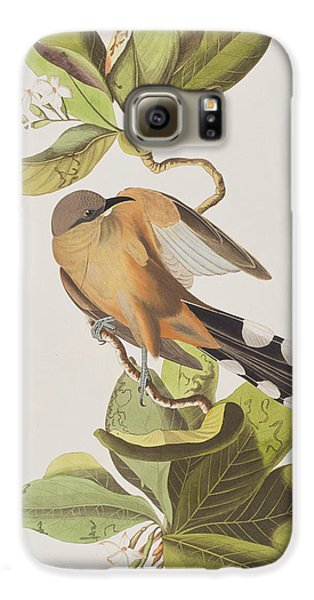 Cuckoo Galaxy S6 Case - Mangrove Cuckoo by John James Audubon