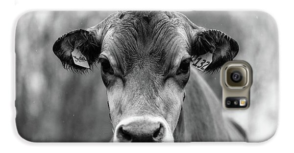 Portrait Of A Dairy Cow In The Rain Stowe Vermont Galaxy S6 Case