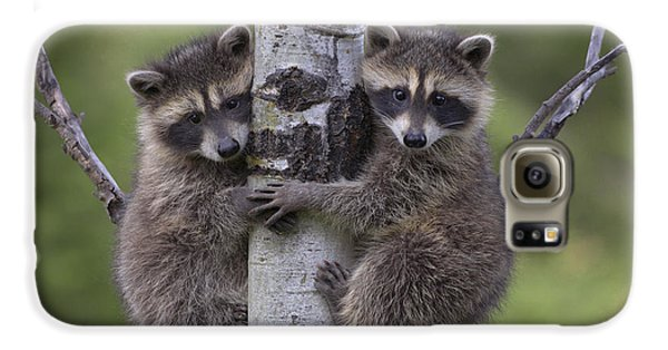 Raccoon Galaxy S6 Case - Raccoon Two Babies Climbing Tree North by Tim Fitzharris