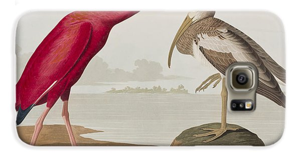 Scarlet Ibis Galaxy S6 Case by John James Audubon