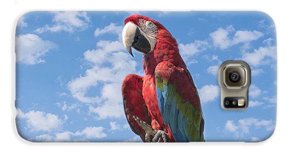 Macaw Galaxy S6 Case - Scarlet Macaw by Kim Hojnacki