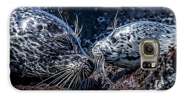Seal Pup With Mom Galaxy S6 Case