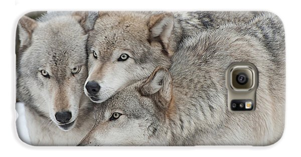 Three Wolves Are A Crowd Galaxy S6 Case