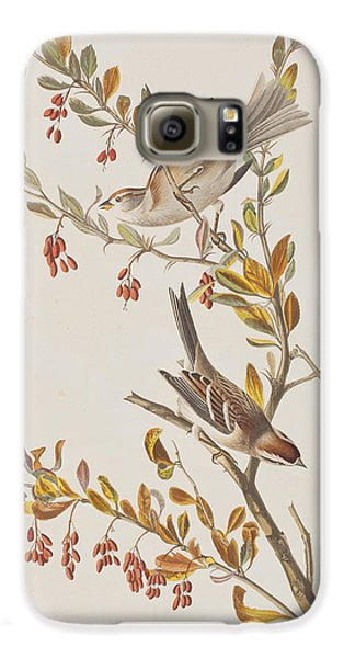Tree Sparrow Galaxy S6 Case by John James Audubon