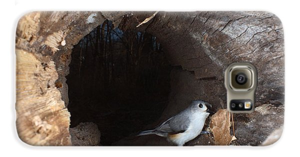 Tufted Titmouse In A Log Galaxy S6 Case by Ted Kinsman