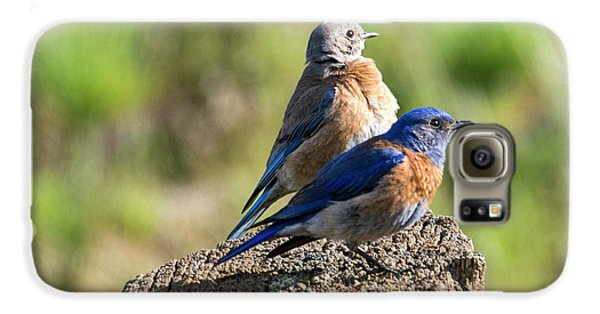 Western Bluebird Pair Galaxy S6 Case by Mike Dawson