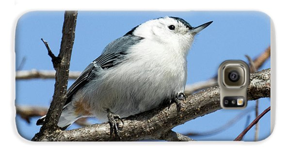 White-breasted Nuthatch Galaxy S6 Case by Ricky L Jones