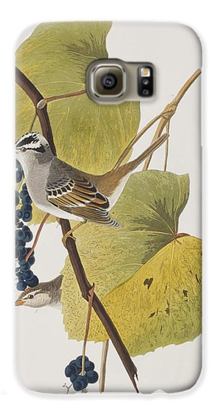 White-crowned Sparrow Galaxy S6 Case by John James Audubon