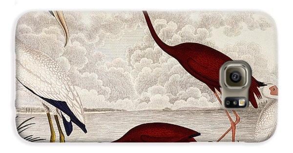 Wood Ibis, Scarlet Flamingo, White Ibis Galaxy S6 Case by Alexander Wilson