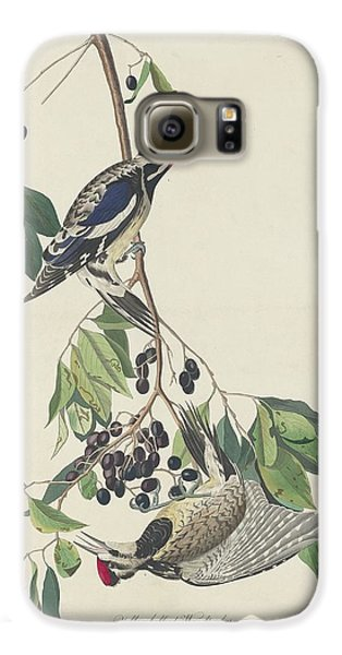 Yellow-bellied Woodpecker Galaxy S6 Case by Dreyer Wildlife Print Collections