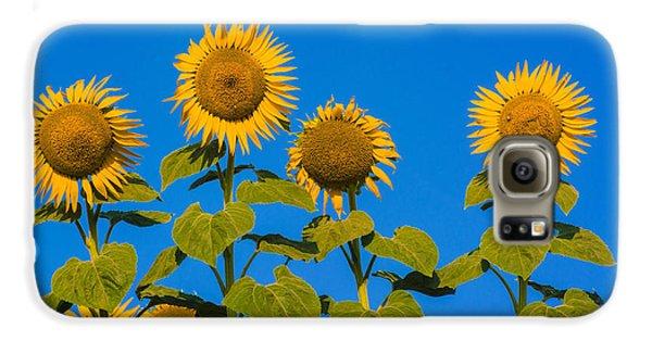 Sunflower Galaxy S6 Case - Field Of Sunflowers by Bernard Jaubert