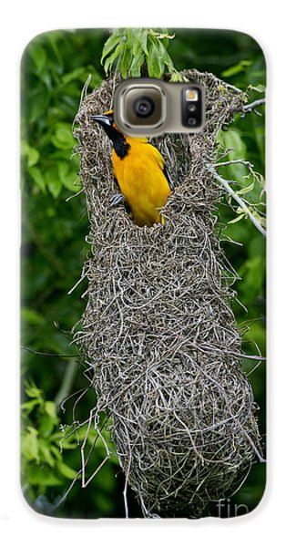Altamira Oriole Galaxy S6 Case