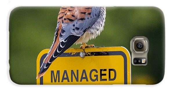 American Kestrel Galaxy S6 Case