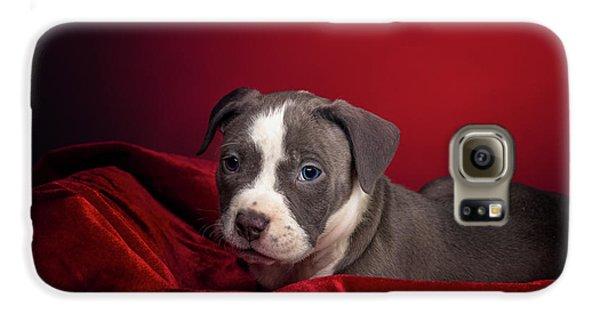 American Pitbull Puppy Galaxy S6 Case