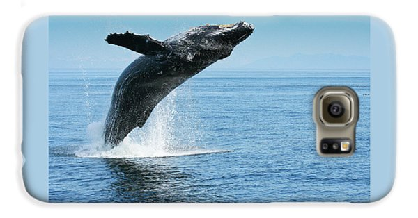 Breaching Humpback Whales Happy-1 Galaxy S6 Case