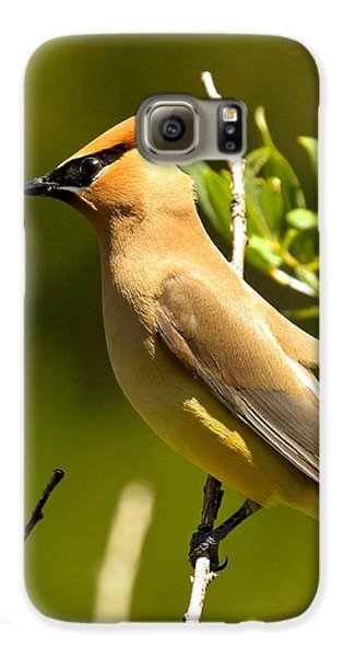 Cedar Waxwing Closeup Galaxy S6 Case by Adam Jewell