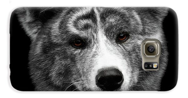 Dog Galaxy S6 Case - Closeup Portrait Of Akita Inu Dog On Isolated Black Background by Sergey Taran