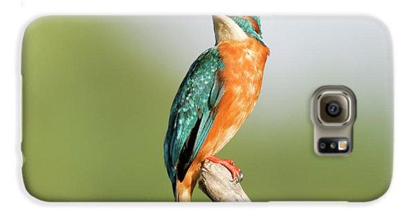 Common Kingfisher Alcedo Atthis Galaxy S6 Case