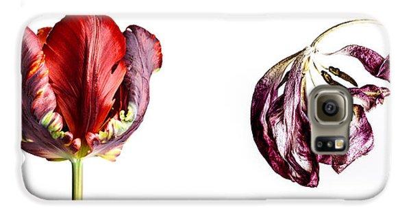 Tulip Galaxy S6 Case - Fading Beauty by Nailia Schwarz