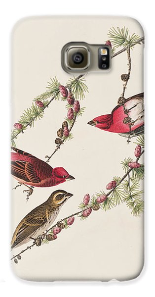 Purple Finch Galaxy S6 Case by John James Audubon