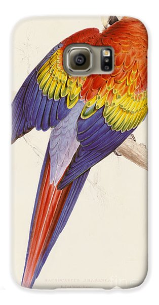 Red And Yellow Macaw Galaxy S6 Case by Edward Lear