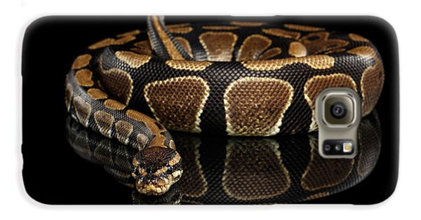 Ball Or Royal Python Snake On Isolated Black Background Galaxy S6 Case by Sergey Taran