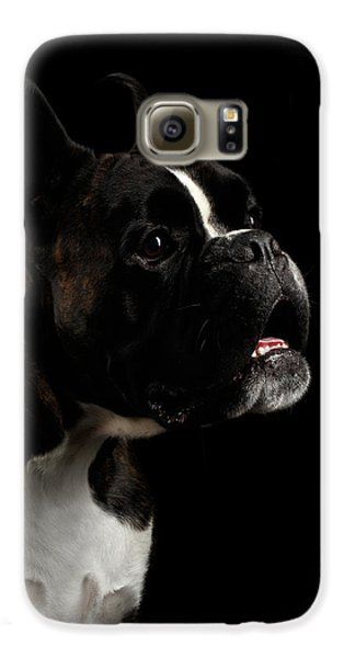 Purebred Boxer Dog Isolated On Black Background Galaxy S6 Case