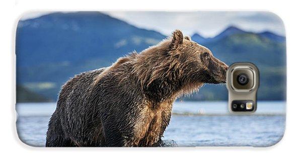 Coastal Brown Bear  Ursus Arctos Galaxy S6 Case by Paul Souders