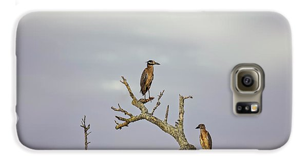 Green Heron Galaxy S6 Case