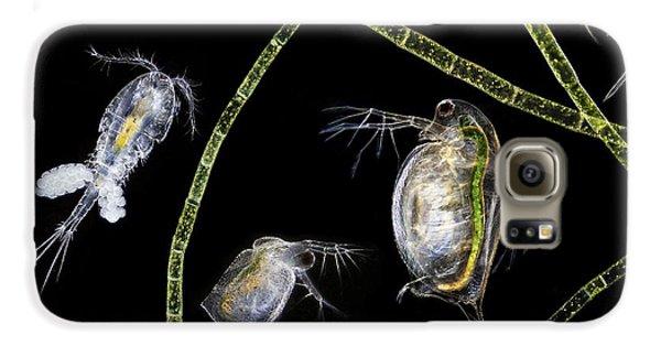Cyclops Galaxy S6 Case - Pond Life by Laguna Design
