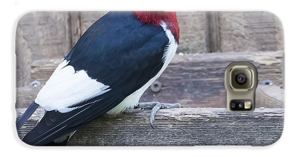 Red-headed Woodpecker Galaxy S6 Case