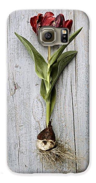 Tulip Galaxy S6 Case - Tulip by Nailia Schwarz