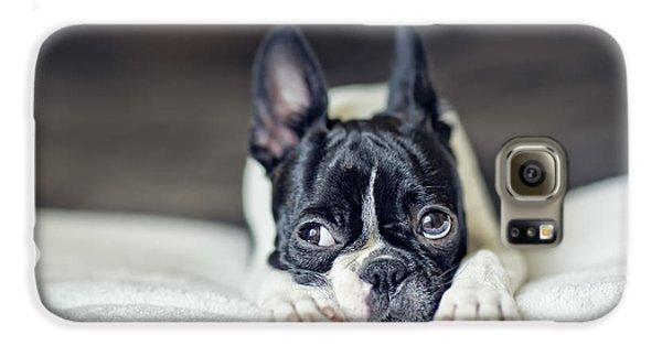 Boston Terrier Puppy Galaxy S6 Case by Nailia Schwarz
