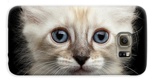 Cat Galaxy S6 Case - Cute American Curl Kitten With Twisted Ears Isolated Black Background by Sergey Taran