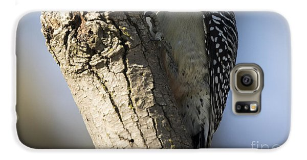 Red-bellied Woodpecker Galaxy S6 Case
