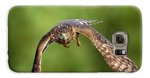 Red-tailed Hawk Galaxy S6 Case