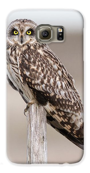 Short Eared Owl Galaxy S6 Case by Ian Hufton