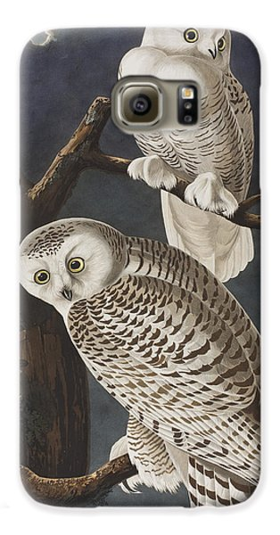 Snowy Owl Galaxy S6 Case by John James Audubon