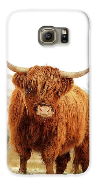 Highland Cow Galaxy S6 Case by Grant Glendinning