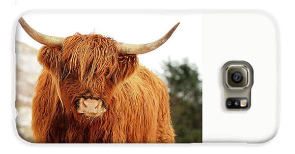 Highland Cow Galaxy S6 Case