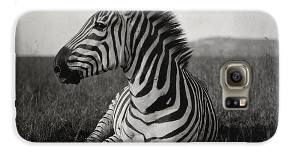 A Burchells Zebra At Rest Galaxy S6 Case
